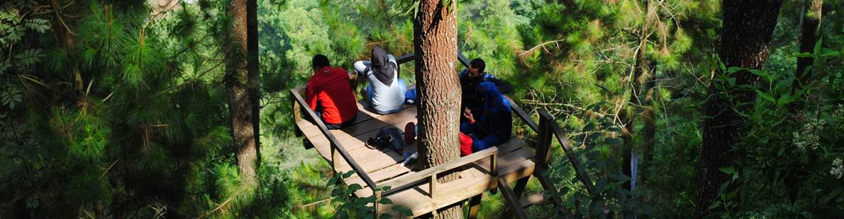 tree house batu