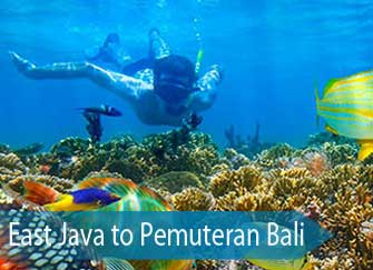 Snorkeling West Bali National Park