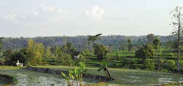 Village walking tour at the slopes of Arjuno - East Java