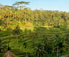Tegallalang rice fields near Ubud in Bali, Indonesia