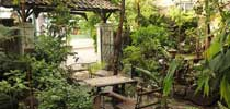 The garden of Dewi Home Stay in Yogyakarta, Java