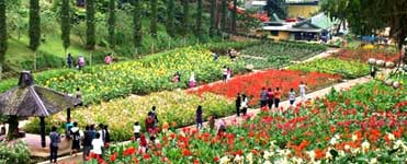 Selecta flower village in Batu - East Java